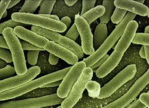 Probiotics could be the key to improved oral health.