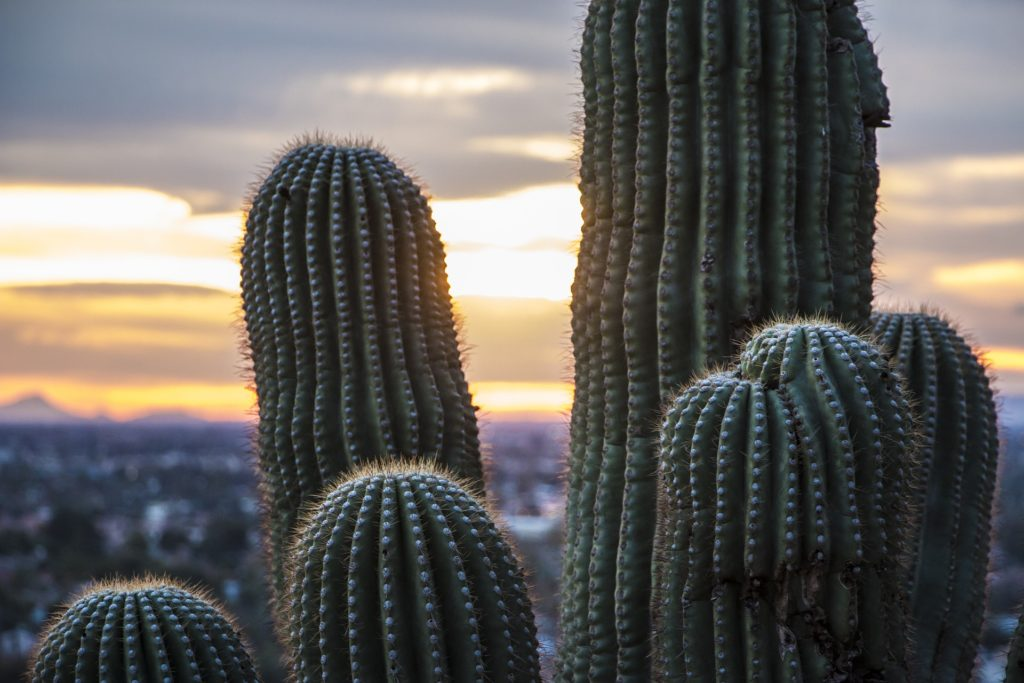 We're hosting our first two CMS courses of the year in Scottsdale, AZ.