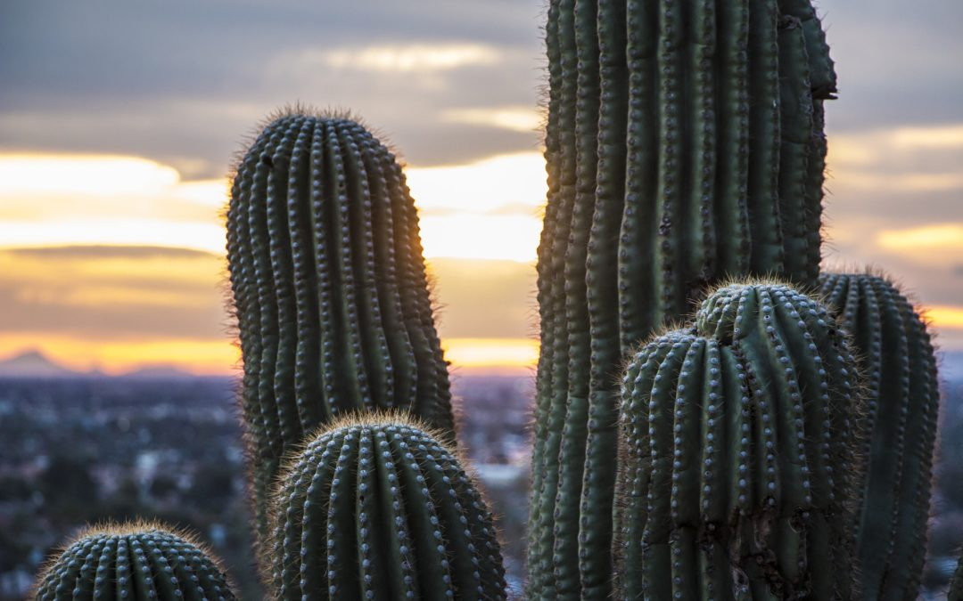 Top Things You Need to Do: Make the Most of Scottsdale CE